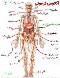 پاورپوینت آناتومی بدن انسان